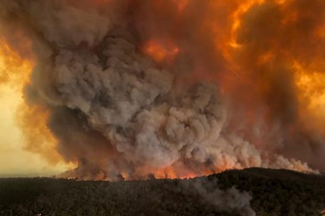 Australia Fires Wreaking Havoc Environmentally